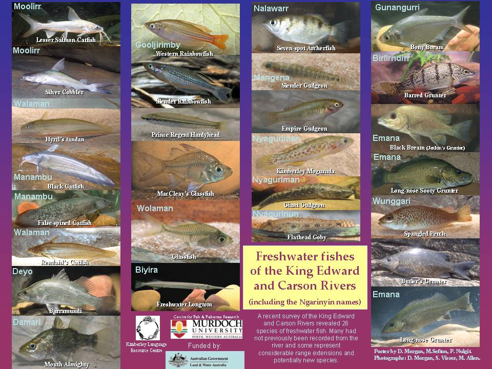 Freshwater fish pictures with names for Cisco s sportfishing fish count